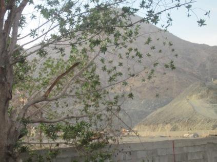 Jabal Tsur dari kejauhan